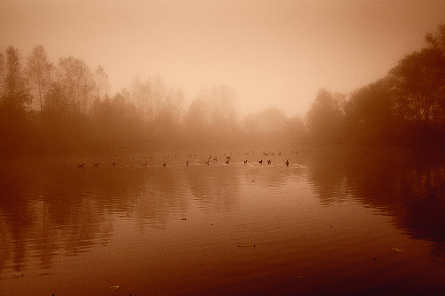 Geese Photograph - Just Fine Thanks by Monte Arnold