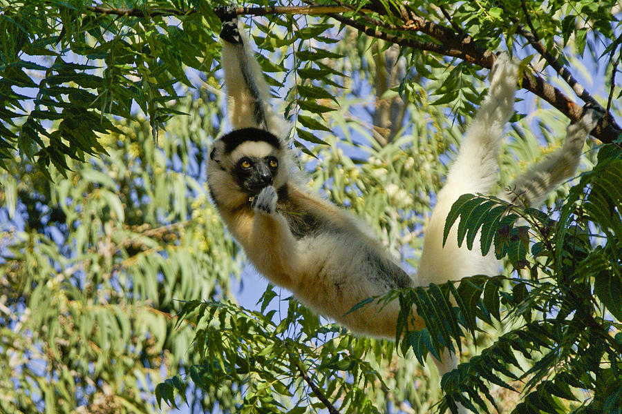 Africa Photograph - Just Hanging Around by Michele Burgess