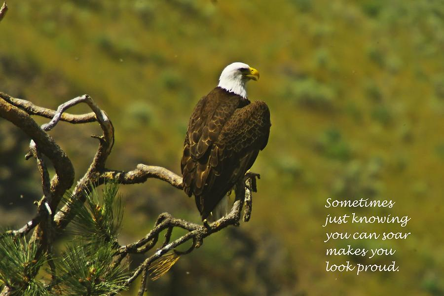 Eagles Photograph - Just Knowing by Jeff Swan