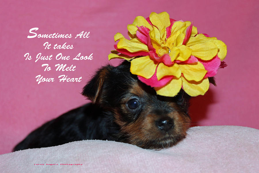Puppy Photograph - Just One Look by Lorna Rogers Photography