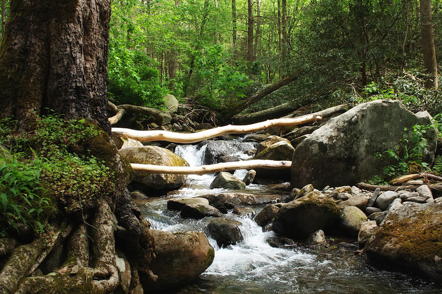 Gatlinburg Photograph - Just Outside Of Gatlinburg by Mountain Dreams