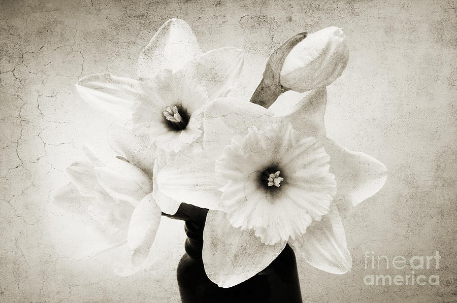 Andee Design Bouquet Photograph - Just Plain Daffy 1 B W - Flora - Spring - Daffodil - Narcissus - Jonquil by Andee Design