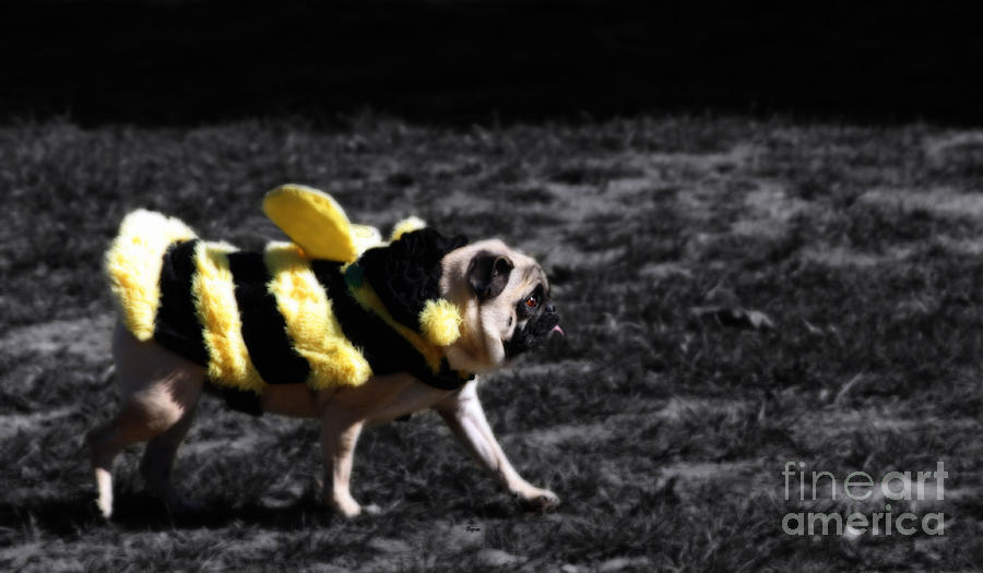 Pug Photograph - Just Pugging Along At The Speed Of Halloween  by Steven Digman