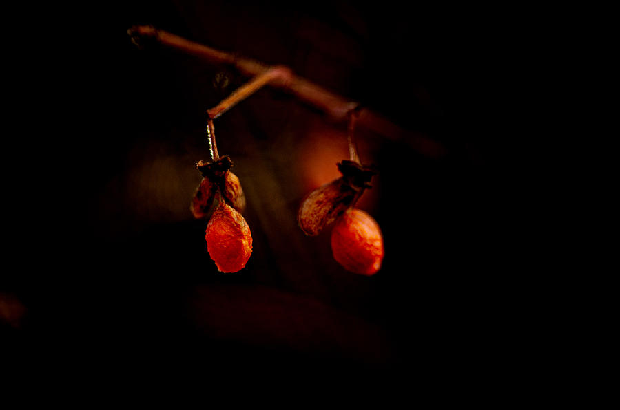 Orange Berries Photograph - Just Two by Susan Capuano