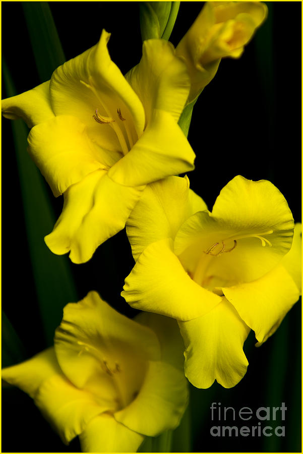 Just Yellow Photograph by Timothy J Berndt