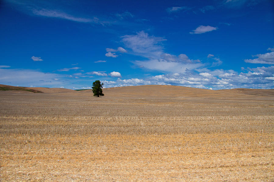 Palouse Photograph - Just You And I by Kunal Mehra