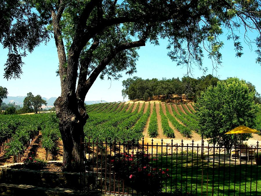 Silverado Trail Photograph - Justin Vineyards Paso Robles California Wine Country Winery by Ron Bartels