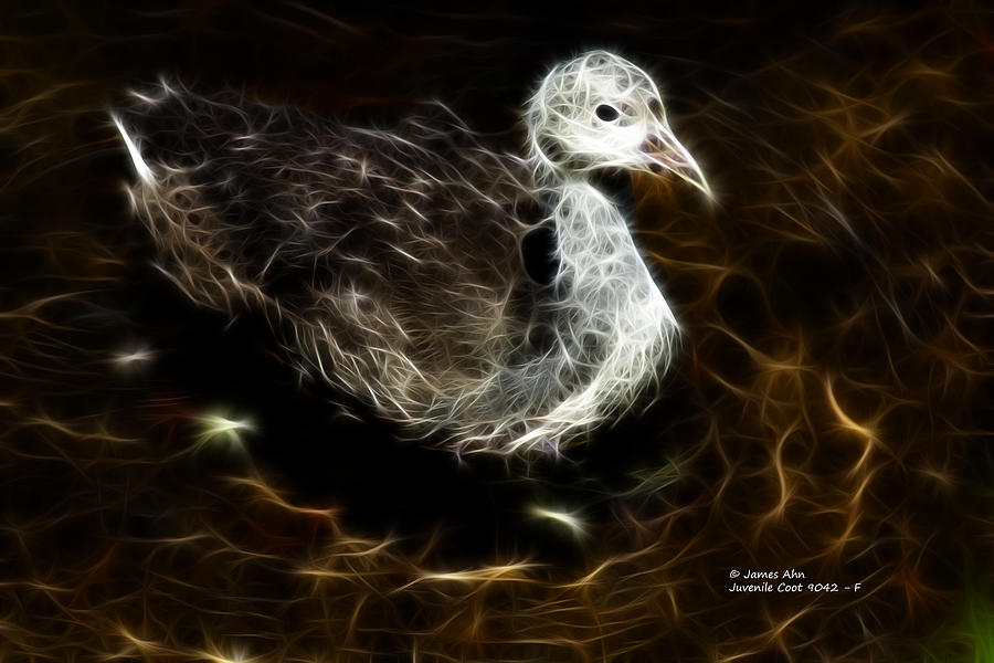 Cute Bird Digital Art - Juvenile Coot 9042 - F by James Ahn