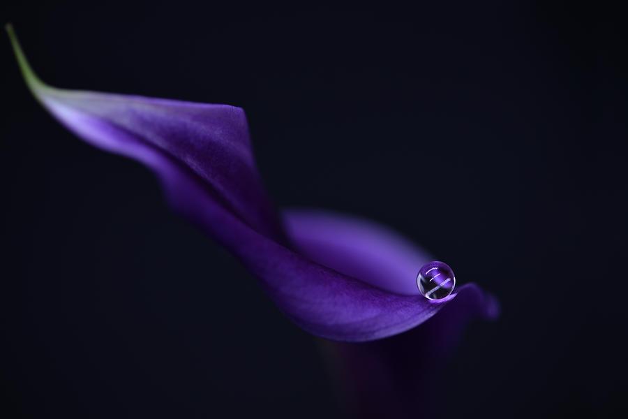 Purple Photograph - Kala`s Pearl Lll by Heidi Westum