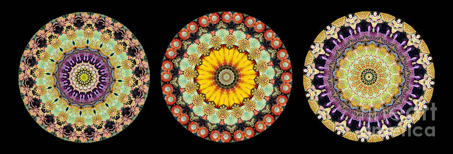 Ernst Haeckel Photograph - Kaleidoscope Ernst Haeckl Inspired Sea Life Series Triptych by Amy Cicconi