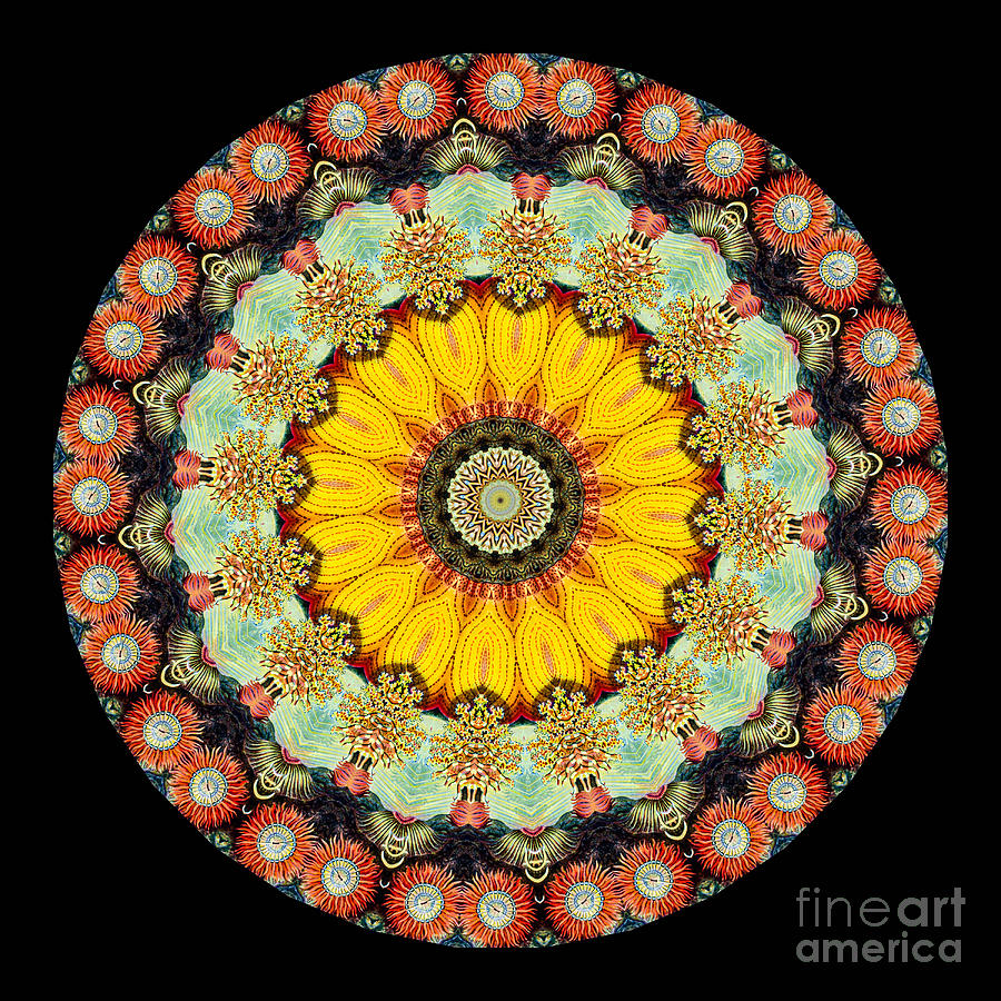 Abstract Photograph - Kaleidoscope Ernst Haeckl Sea Life Series by Amy Cicconi