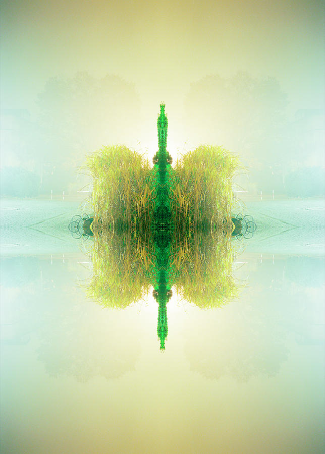 Kaleidoscope Yellow Green Plant Hovering Photograph by Silvia Otte