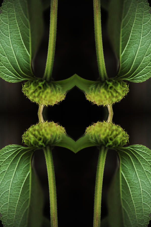 Kaleidoscopic Composite Of Green Leaved Photograph by Silvia Otte