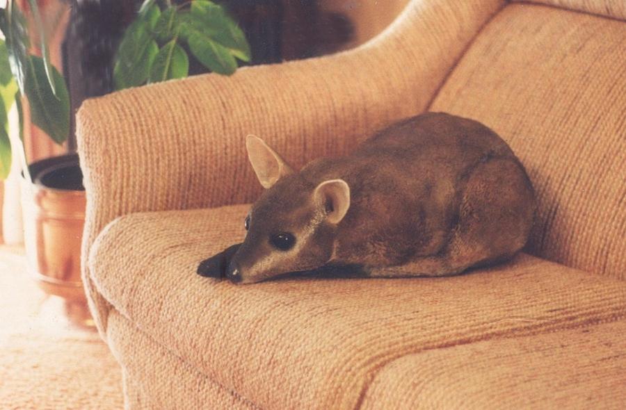 Kangaroo Painting - Kangaroo Buddy Sculpture by Arlene Delahenty