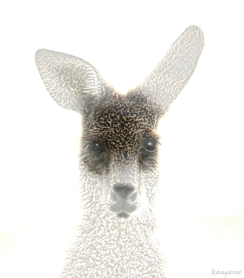 Animals Photograph - Kangaroo by Holly Kempe