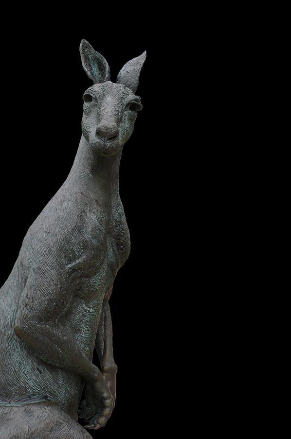 Kangaroo Photograph - Kangaroo Smith On Black by Gregory Smith