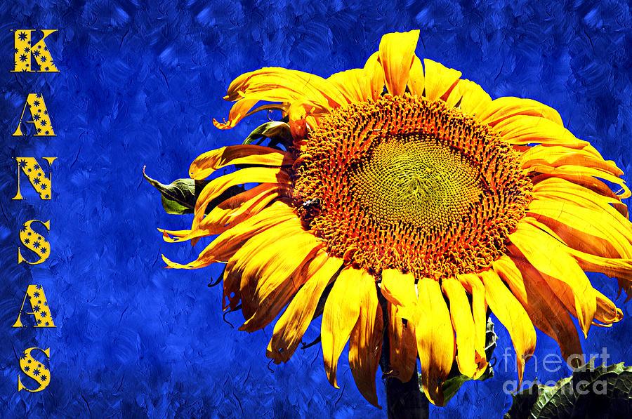 Sunflower Photograph - Kansas by Andee Design