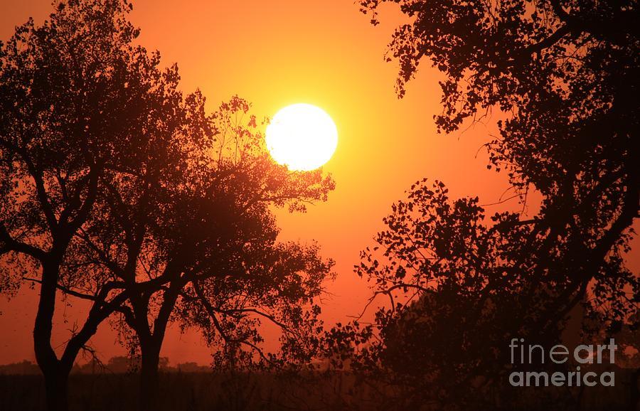 Sunset Photograph - Kansas Golden Sunset With Trees by Robert D  Brozek