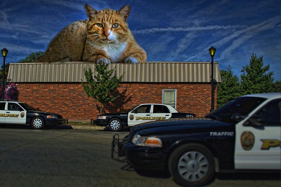 Police Photograph - Katastrophic by Tim McCullough