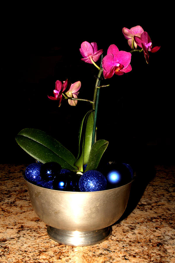 Flower Photograph - Kathys Orchid by Robert Morin