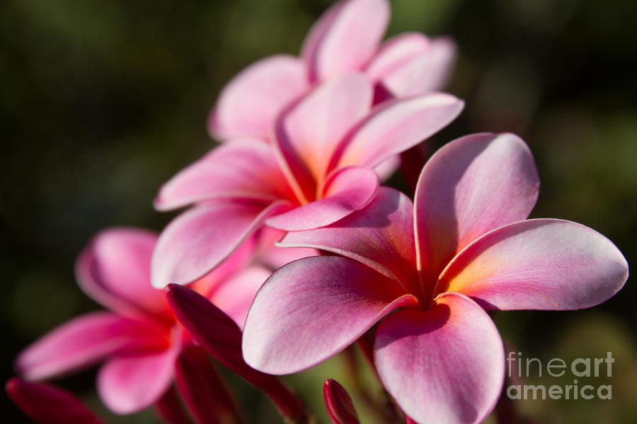 Aloha Photograph - Kaupo Summer Treasure by Sharon Mau