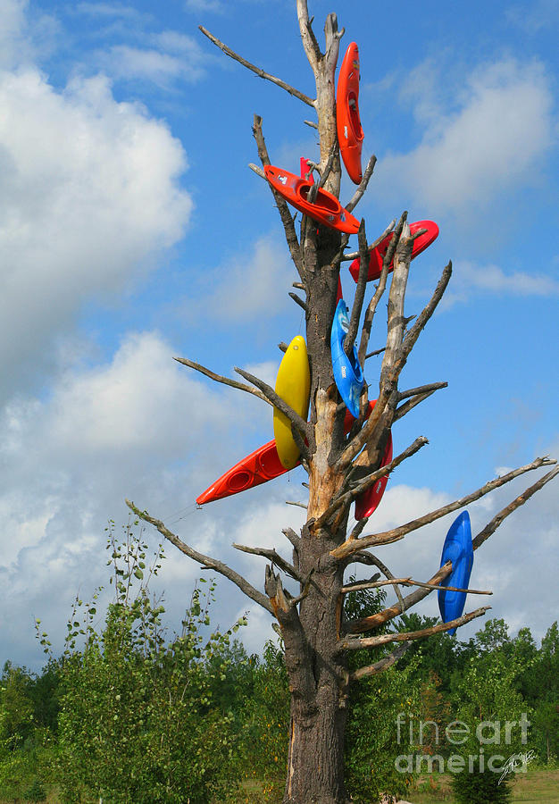 Kayaks Photograph - Kayak Tree by Erika Weber