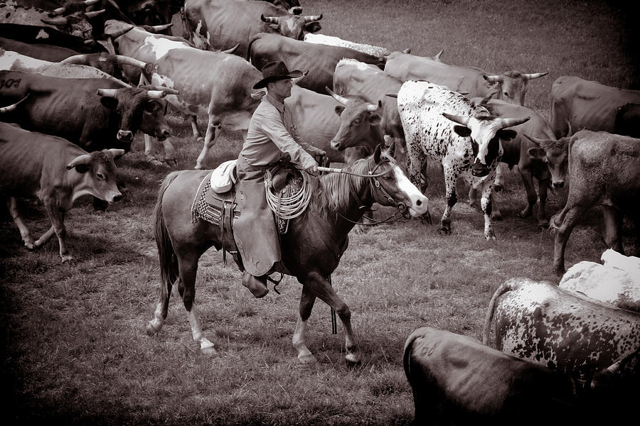 Cowboy Photograph Photograph - Keep Em Moving by Toni Hopper