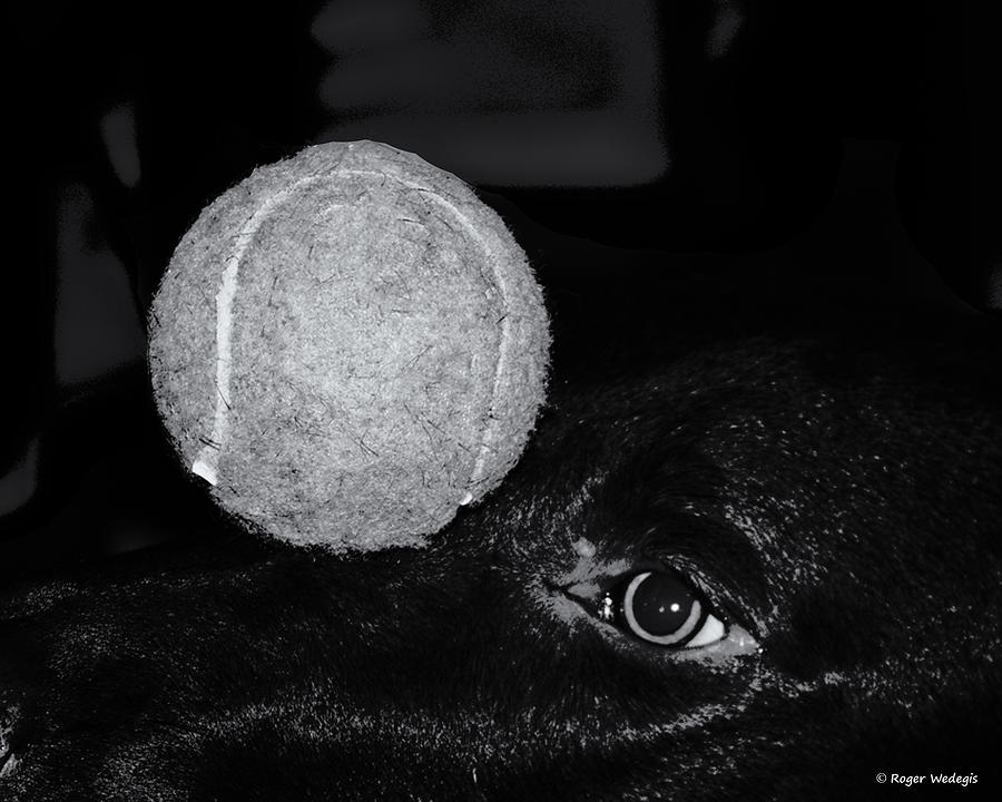 Dog Photograph - Keep Your Eye On The Ball by Roger Wedegis