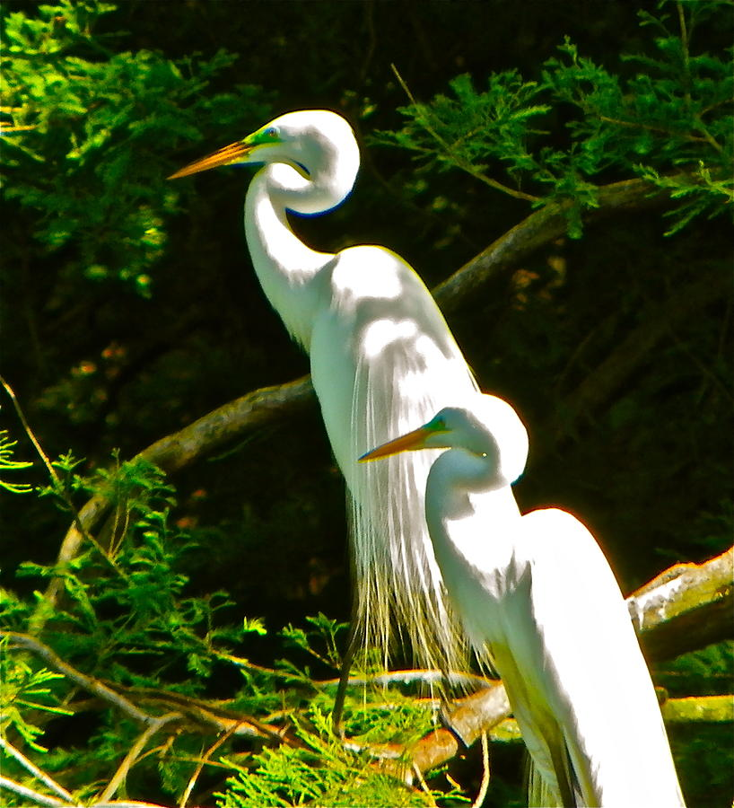 Keeping Watch by Phyllis Dunn
