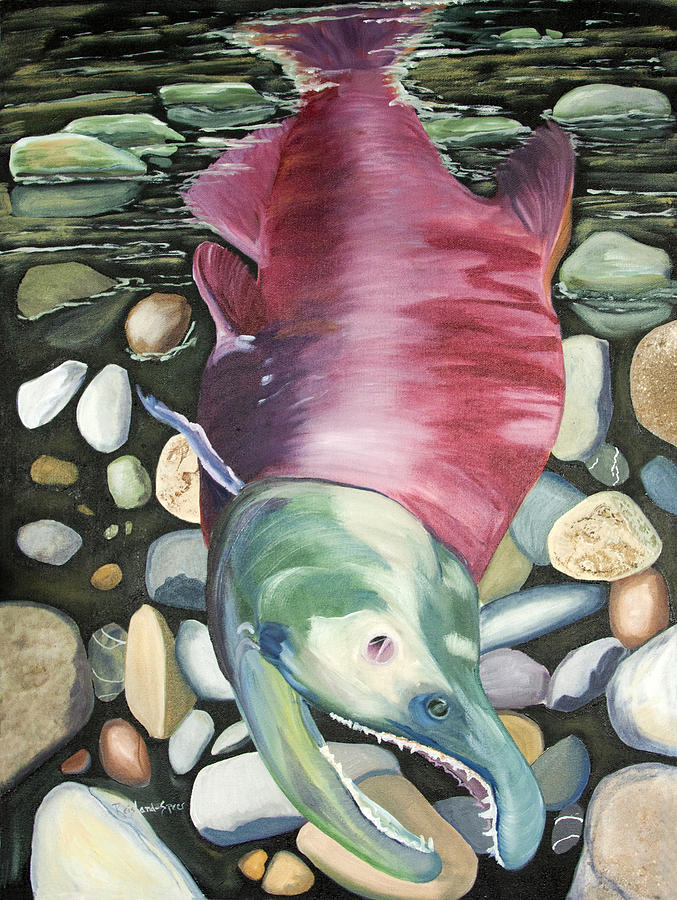 Salmon Painting - Kenai Ded Red 2 by Amy Reisland-Speer