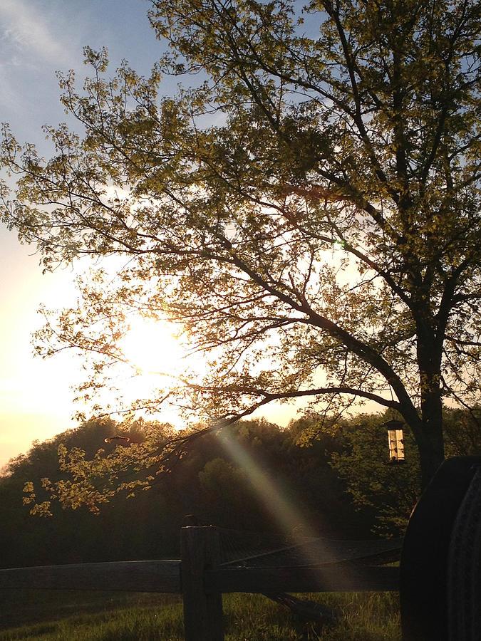 Kentucky Sunbeam Photograph