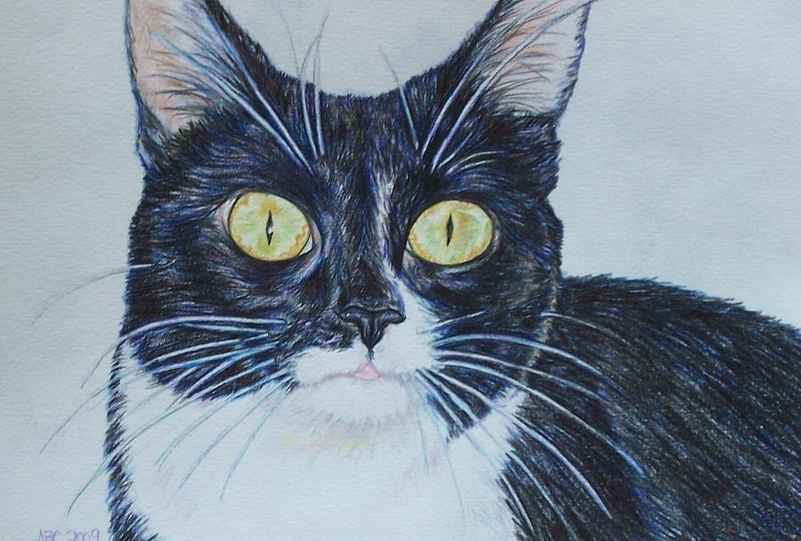 Cats Drawing - Kenzie by Beth Clark-McDonal
