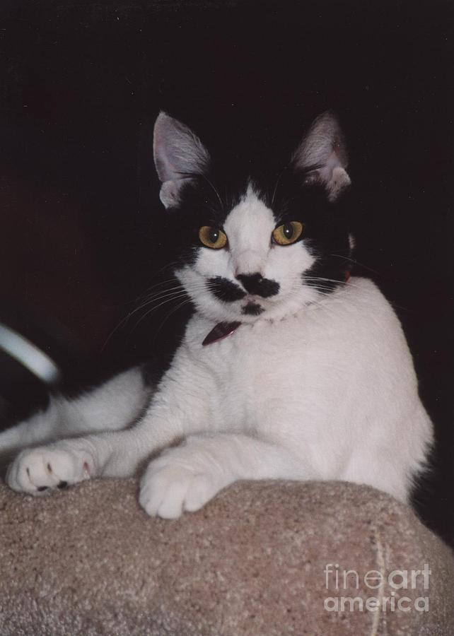 Cat Photograph - Kera by Kathleen Struckle