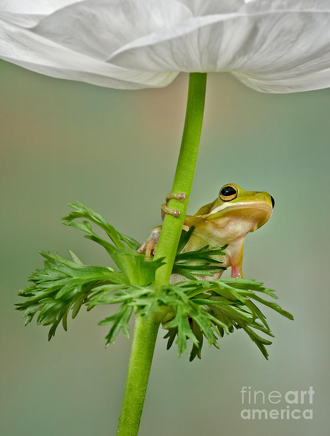 Flowers Photograph - Kermits Canopy by Susan Candelario