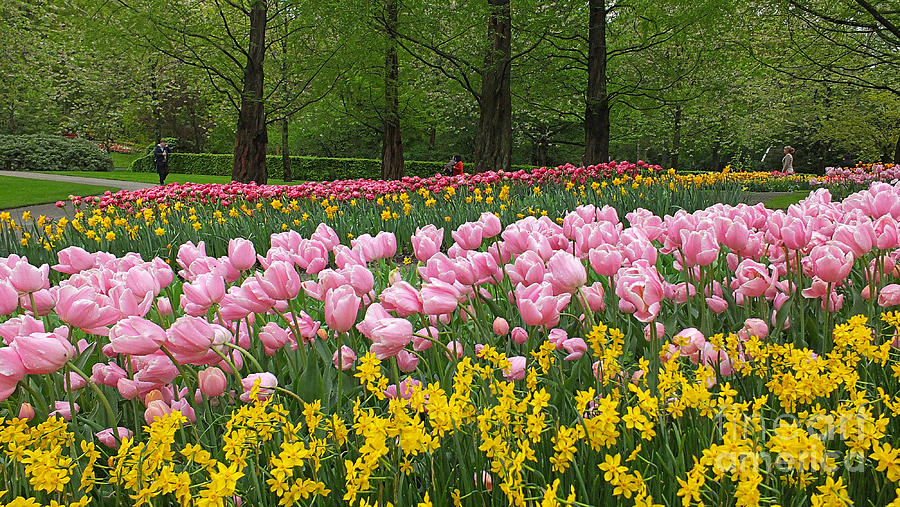 Keukenhof Gardens Photograph - Keukenhof Gardens Panoramic 15 by Mike Nellums