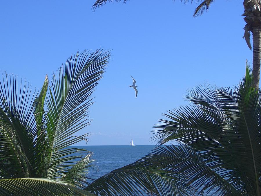 Florida Photograph - Key Largo - Outbound by Lin Grosvenor