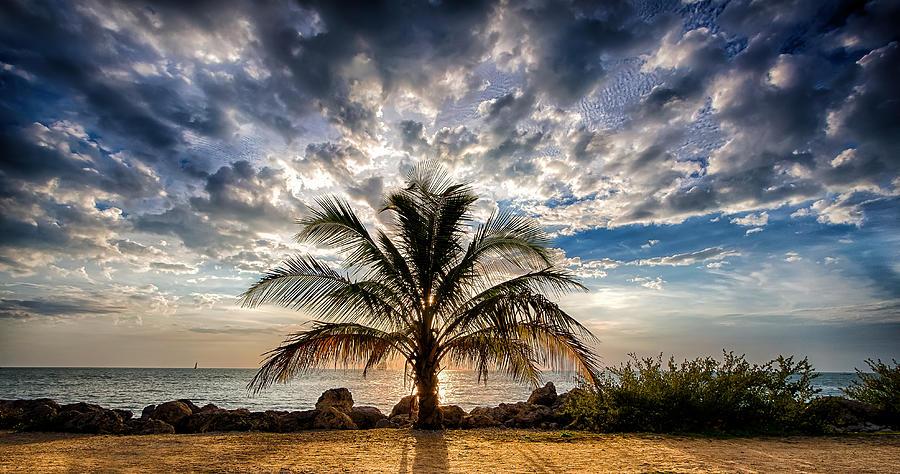 Key West Florida Lone Palm Tree  by Robert Bellomy