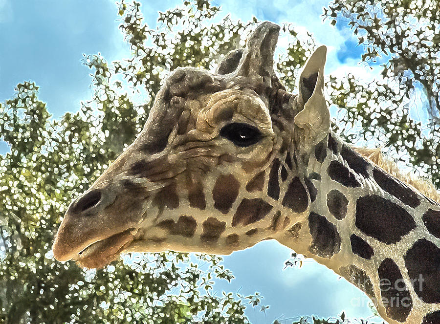 Khama the Silver Springs Giraffe by Kathi Shotwell