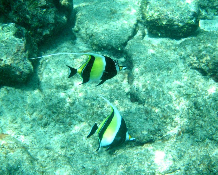 Fish Photograph - Kihikihi Pair by Karen Nicholson