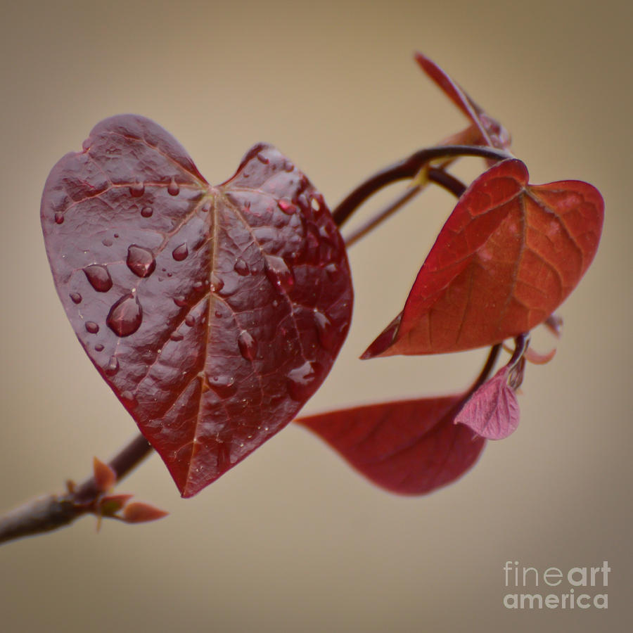 Heart Photograph - Kindness Can Change The World by Kerri Farley