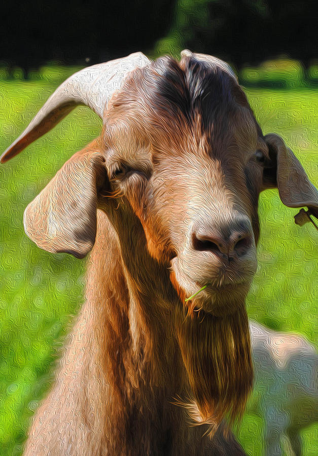 King Billy Goat Digital Art By Karen Lambert