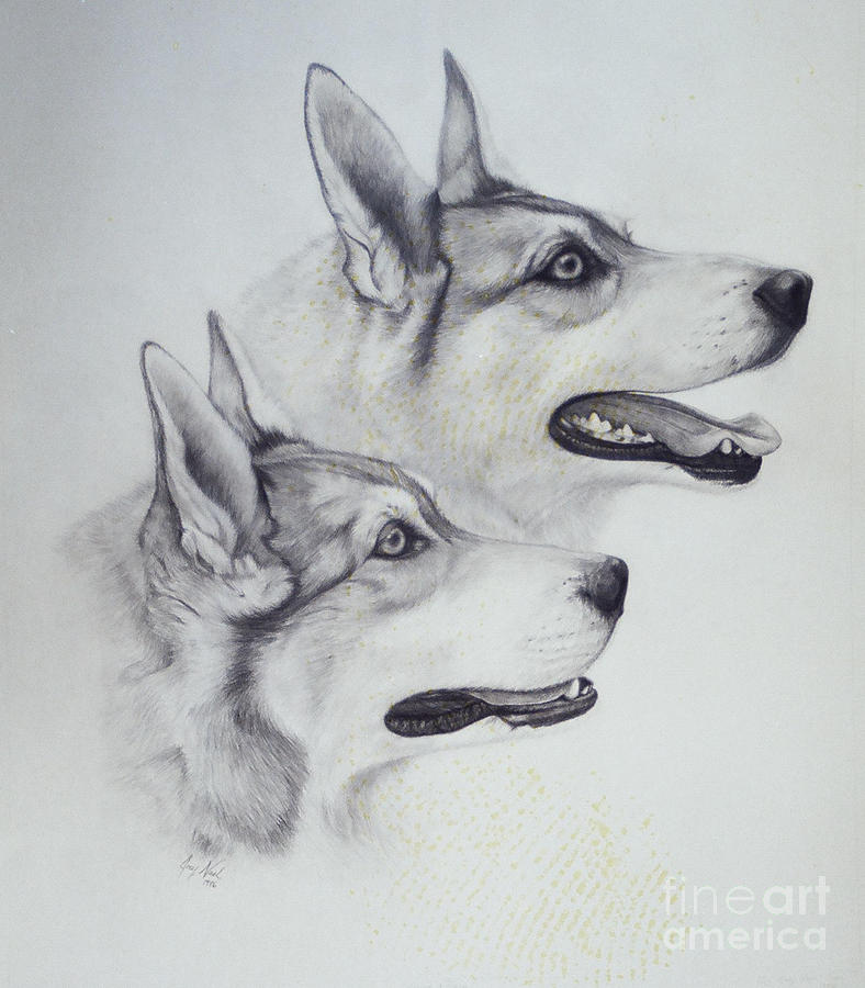 Malamutes Drawing - King Dogs by Joey Nash