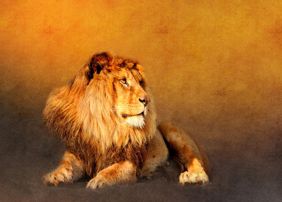Animal Mixed Media - King Leo by Heike Hultsch