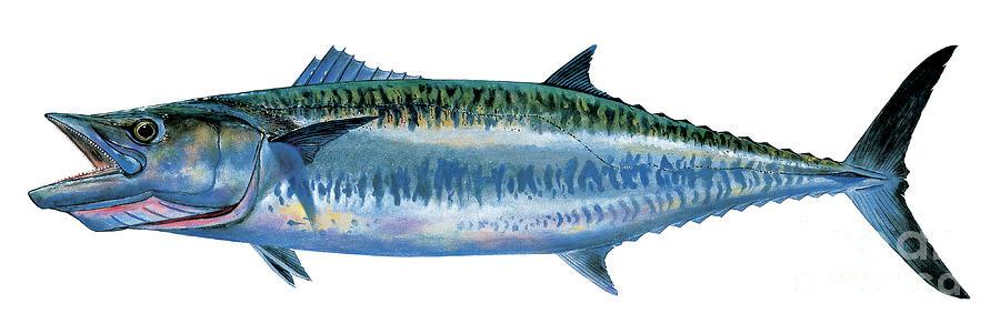 Kingfish Painting - King Mackerel by Carey Chen