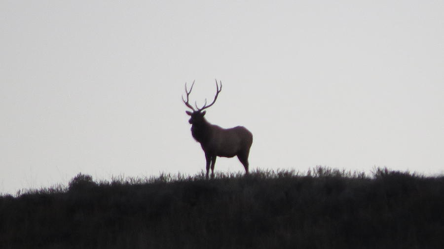 Elk Photograph - King Of The Mountain by Diane Mitchell