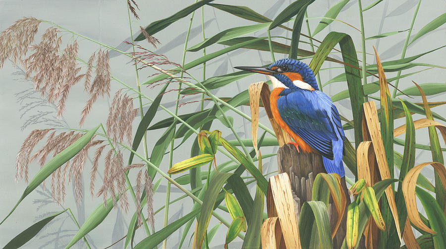 Kingfisher Painting - Kingfisher by Clive Meredith