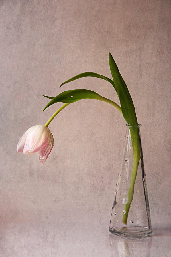 Tulip Photograph - Kiss Of Spring by Claudia Moeckel