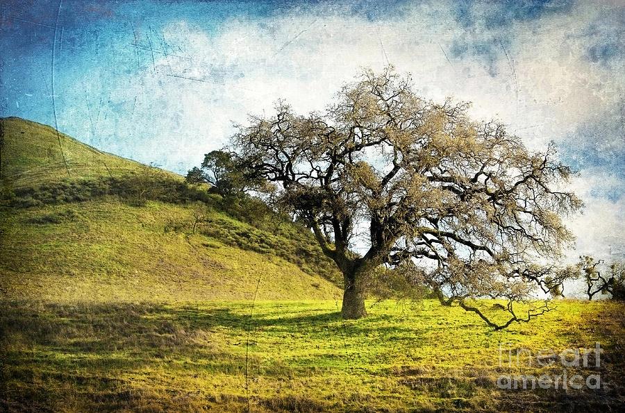 Landscape Photograph - Kiss The Earth by Ellen Cotton