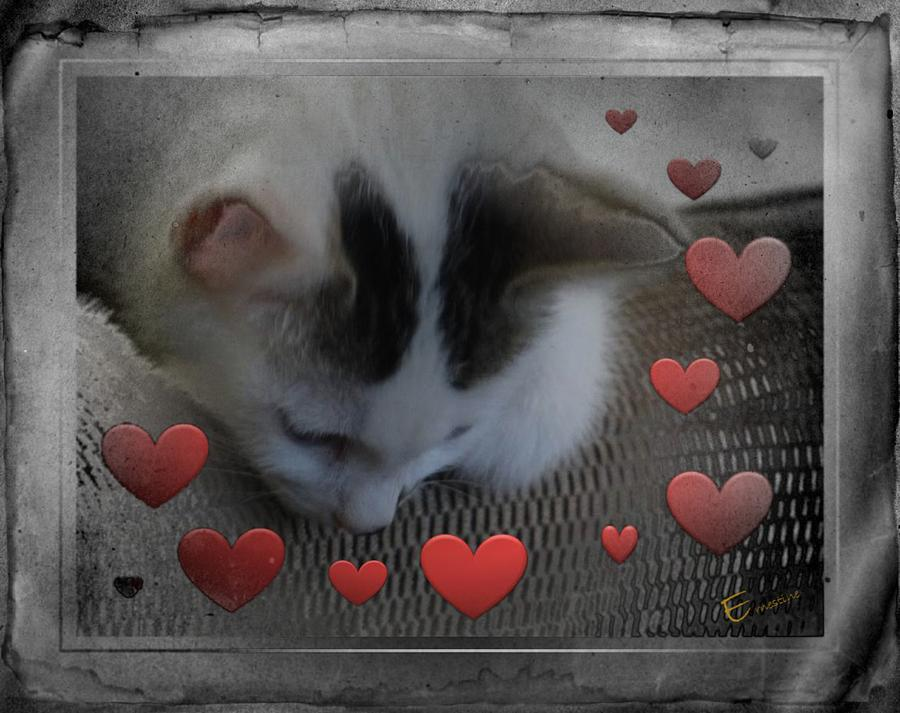 Cat On The Coach Photograph - Kissing Again by Ernestine Manowarda