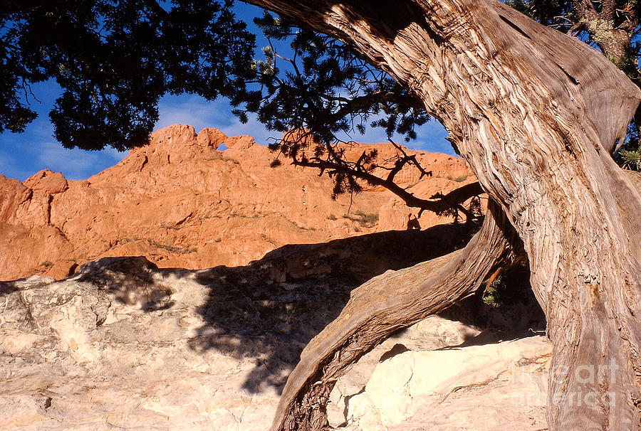 Kissing Camels In Garden Of The Gods Colorado
